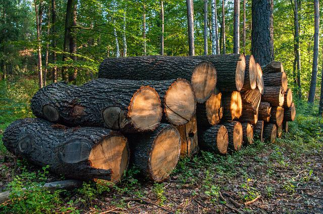 Tree, Then, Forest, Nature, Tree Trunks, Wood