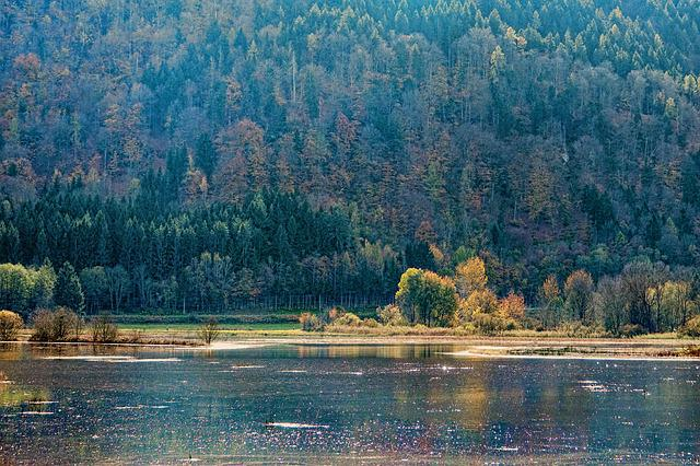 Waters, Nature, Lake, Wood, Tree, Autumn