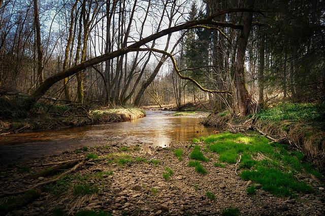 Nature, Waters, Tree, River, Wood, Bach, Forest