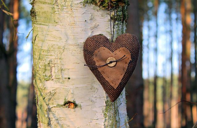 Heart, Emotions, Valentine's Day, Tree, White Bark