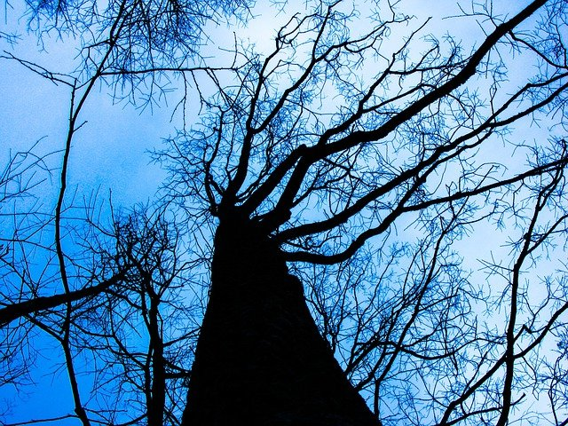 Tree, Dead, Winter, Nature, Winter Mood, Trees, Sky