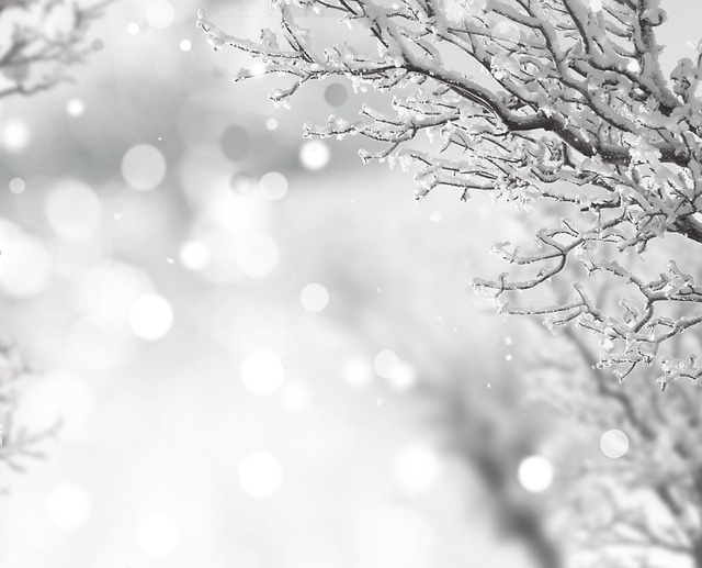 Snow, Tree, Abdel Rahman, Sparkle, Beautiful, Winter