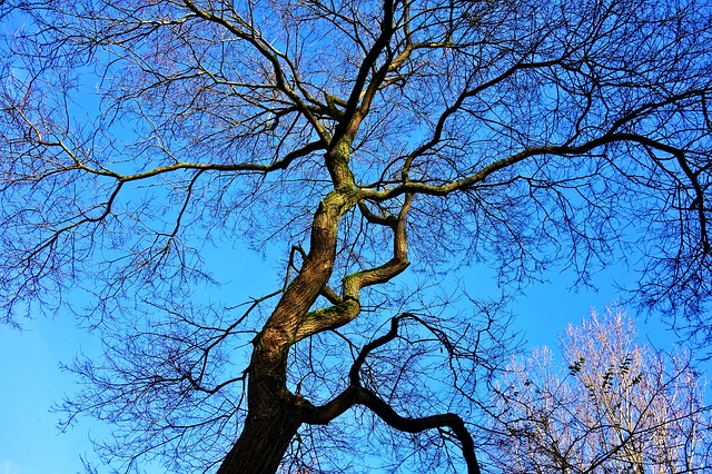 Tree, Winter Tree, Branches, Bare Branches, Blue Skies