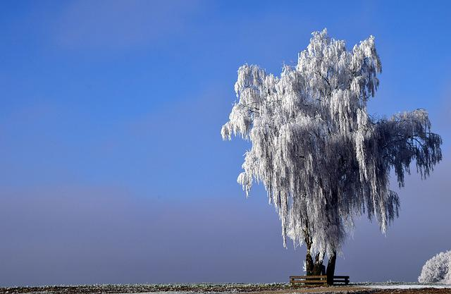Tree, Winter, Wintry, Nature, Snow, Cold, Landscape