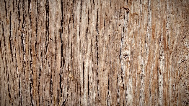 Trunk, Bark, Tree Bark, Tree, Nature, Wood, Texture