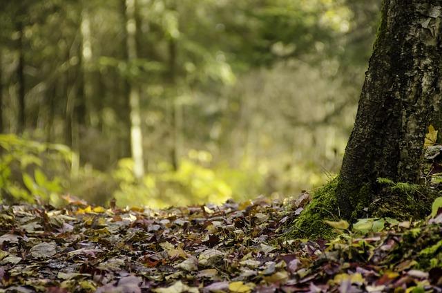 Wood, Nature, Tree, Foam, Leaf, Trail, Fall, Carpet