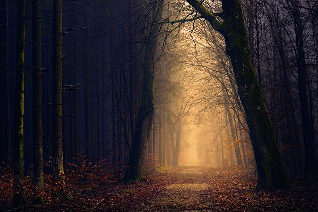 Wood, Forest, Light, Tree, Darkness, Secret, Shadow