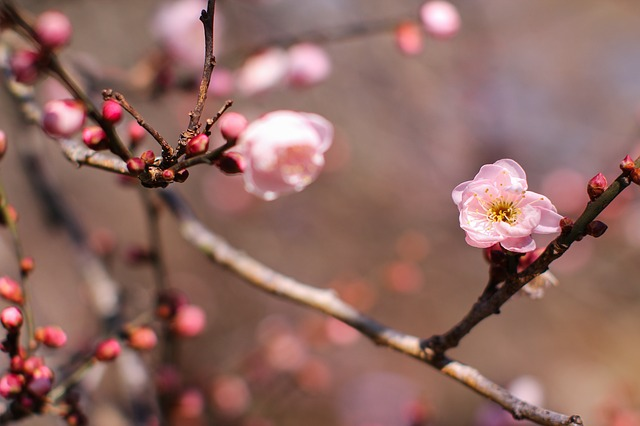 Plum Blossom, Tree Wood, Forest, Scenic Views, Plant
