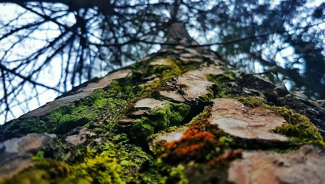 Tree, Green, Bark, Forest, Woods