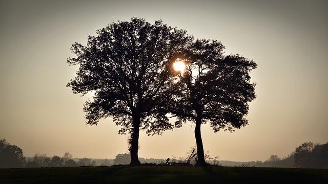Trees, Sunset, Silhouette, Abendstimmung, Twilight