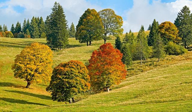 Autumn, Autumn Forest, Trees, Deciduous Trees
