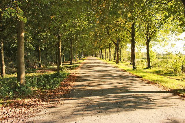 Avenue, Forest, Road, Idyll, Away, Forest Path, Trees