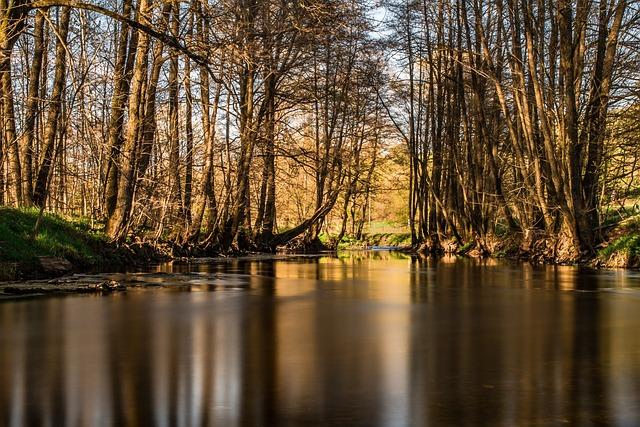 River, Trees, Bald Trees, Bank, Landscape, Forest