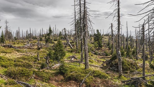 Bavarian Forest, Bavaria, Trees, Bark Beetles