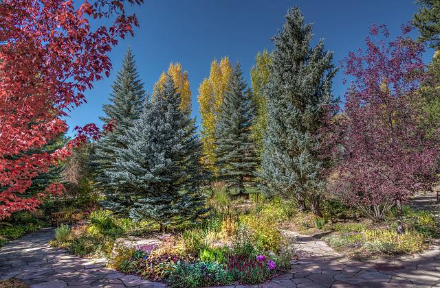 Vail, Colorado, Betty Ford Park, Foliage, Trees