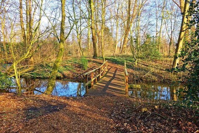 Bridge, Creek, Path, Trees, Landscape, Park, Scenic