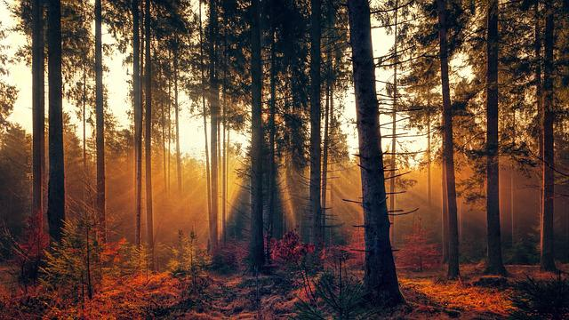 Forest, Fog, Sunlight, Sunbeam, Bright, Autumn, Trees