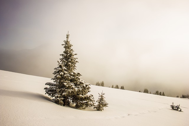 Cold, Snow, Trees, White, Winter