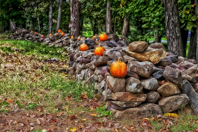 Stone Fence, Connecticut, Forest, Trees, Pumpkins, Fall