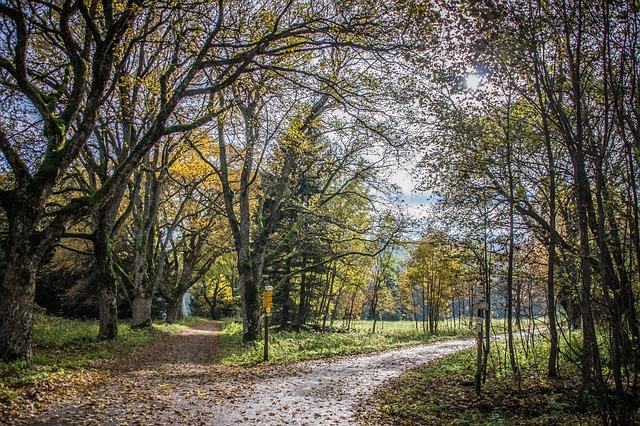 Crossroads, Alley, Treetops, Landscape, Path, Trees