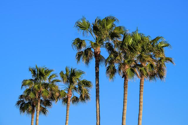 Palm, Tropical, Trees, Sky, Exotic, Nature