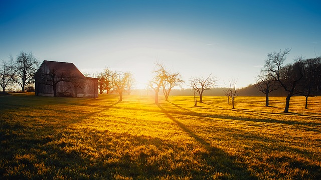 Sunrise, Dawn, Farm, Barn, Field, Meadow, Trees, Bright