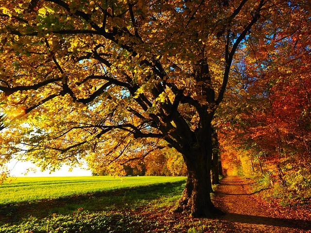 Autumn, Leaves, Trees, Path, Trail, Field, Meadow