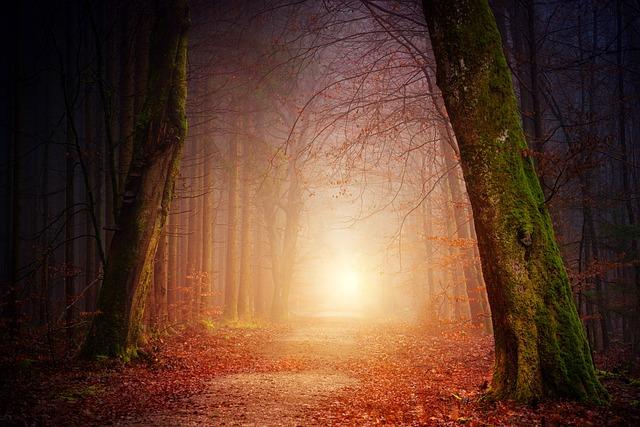 Nature, Forest, Trees, Light, Sun, Fog, Foggy, Sunset