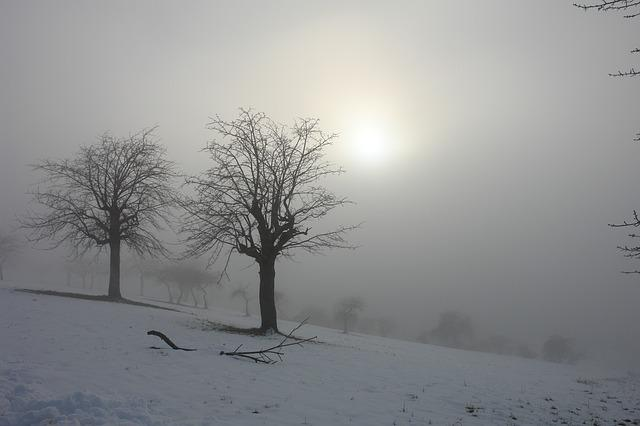 Sun, Winter, Snow, Trees, Landscape, Italy, Fog
