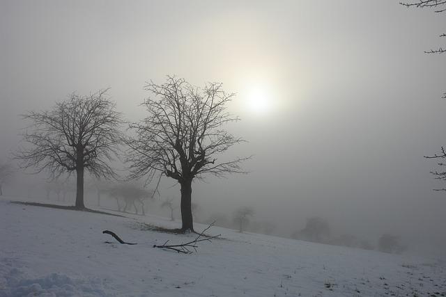 Sun, Winter, Snow, Trees, Landscape, Italy, Fog