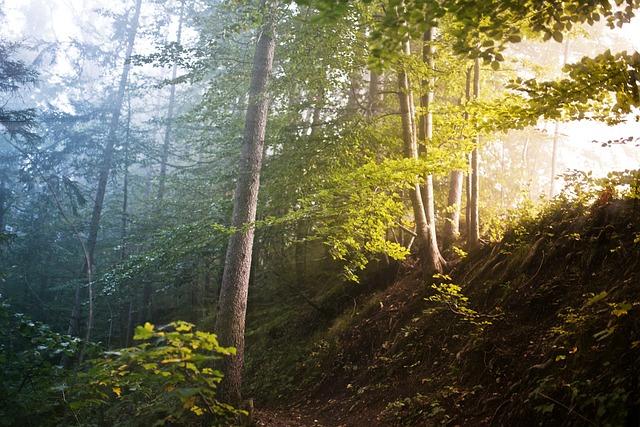 Forrest, Trees, Fog, Color Contrast, Leaves, God Rays