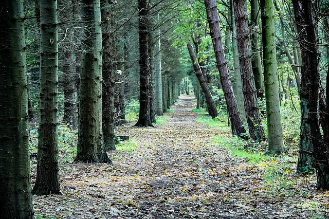 Forest, Away, Trees, Forest Path, Landscape, Green