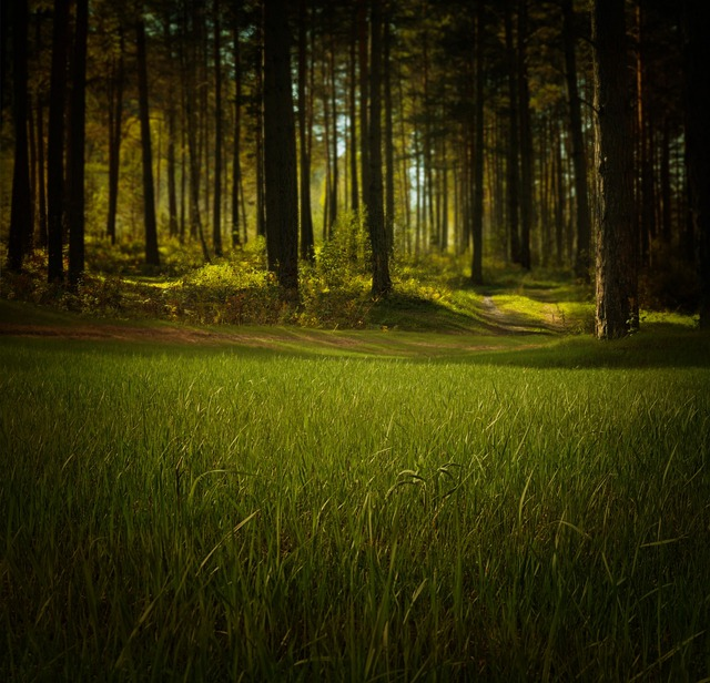 Forest, Nature, Trees, Grass, Fantasy, Night, Mystical