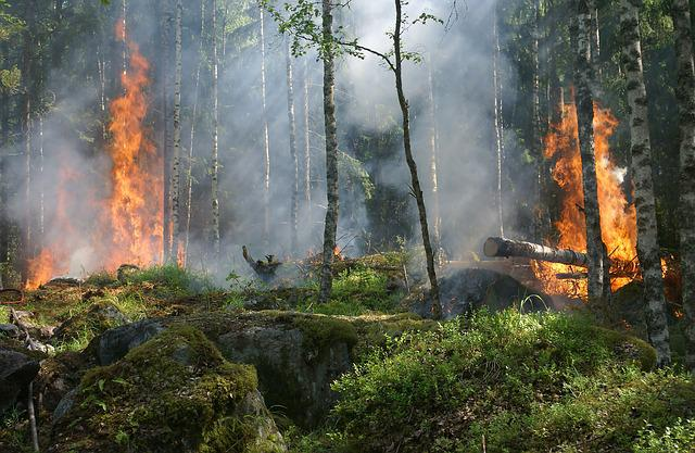 Forest Fire, Trees, Burning, Forest, Fire, Smoke