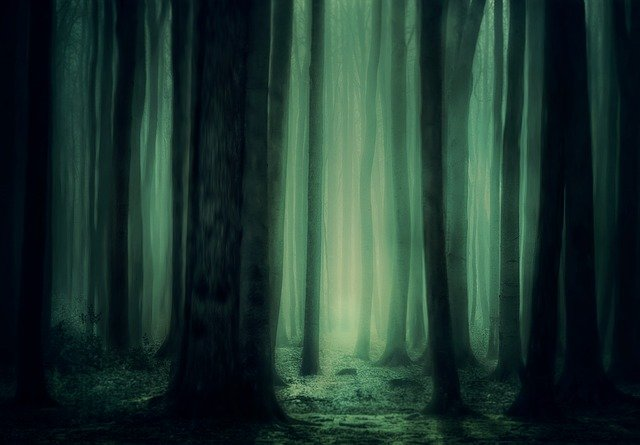Forest, Trees, Fog, Background, Lighting, Atmosphere
