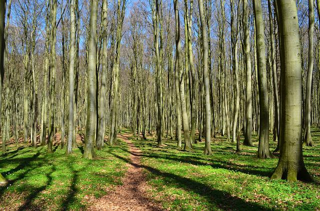 Forest, Forest Path, Coastal Forest, Trees, Green