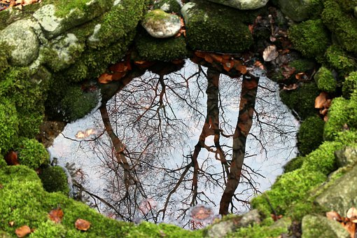 Nature, Source, Fountain, Water, Mirroring, Trees