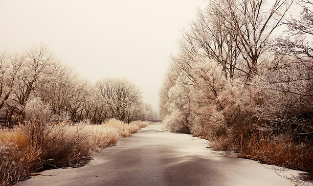 Frozen, Hoarfrost, Ice, Winter, Frozen River, Trees