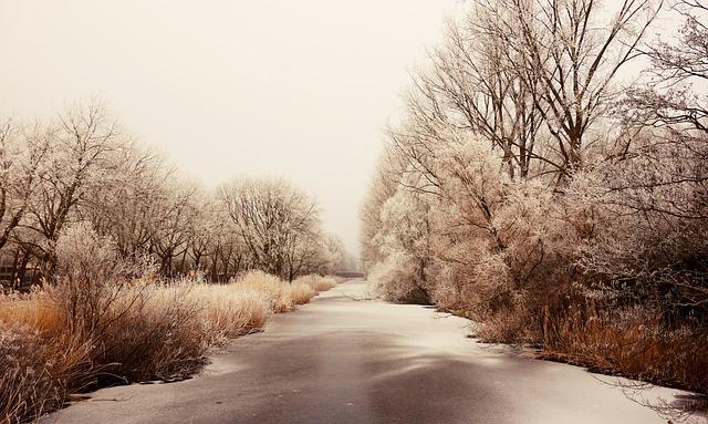 Frozen, Hoarfrost, Ice, Winter, Frozen River, Trees