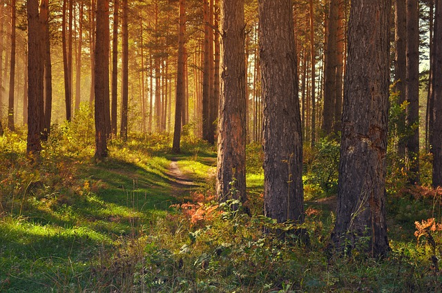 Forest, Nature, Landscape, Trees, Yellow, Gold