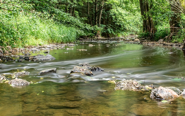 River, Trees, Stones, Bank, Landscape, Forest, Nature