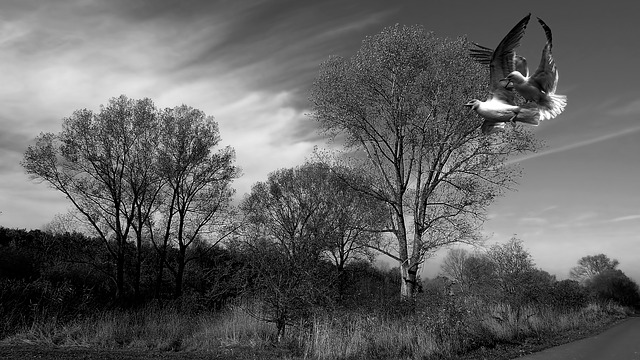Landscape, Trees, Clouds, Birds, Gulls, Black And White