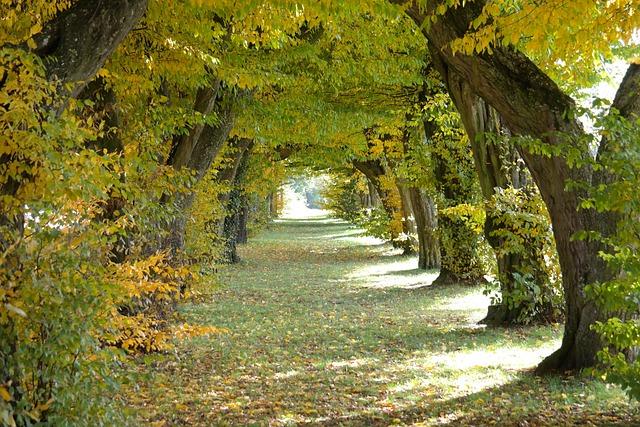Avenue, Castle Avenue, Laupheim, Hornbeam, Trees