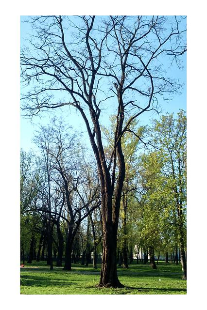 Ukraine, Trees, Spring, Landscape, Greens, Tree, Light