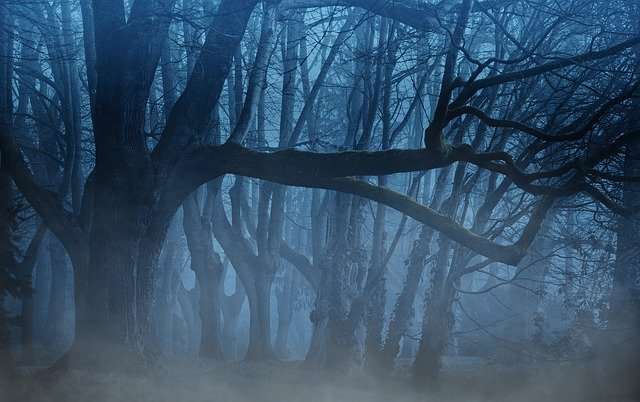 Forest, Fog, Trees, Aesthetic, Weird, Mystical