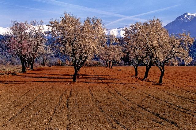 Almond Tree, Trees, Aragon, Nature