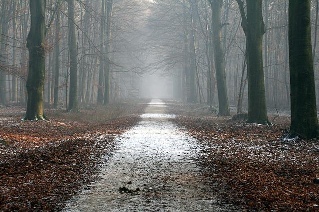 Away, Forest Path, Forest, Trees, Nature, Trail