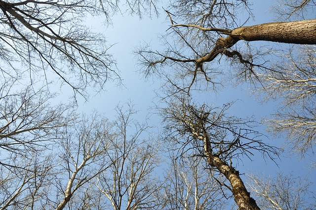 Forest, Trees, Drava, Spring, Nature