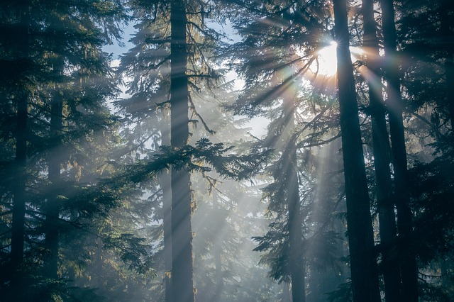 Forest, Nature, Silhouette, Sunlight, Trees, Woods