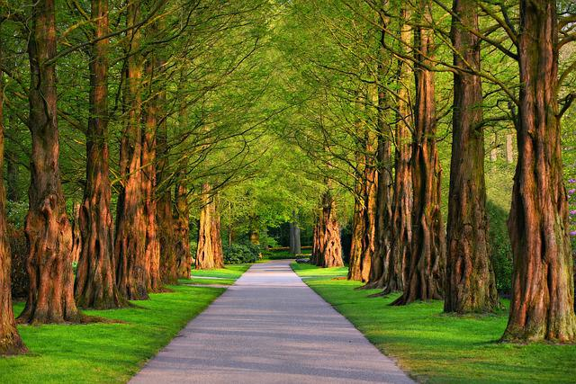 Pathway, Park, Trees, Lane, Road, Path